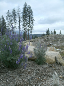 dam-restoration1