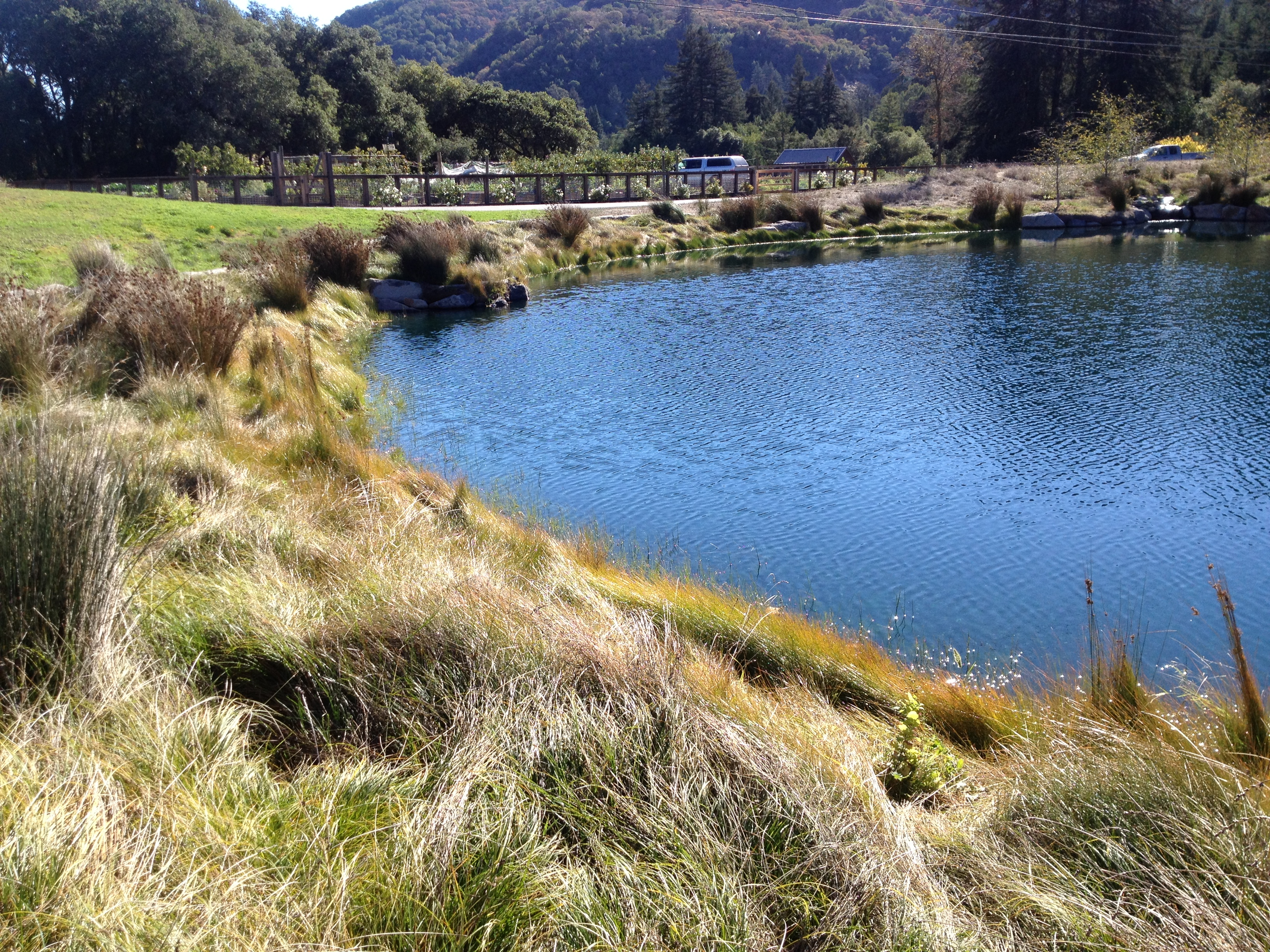 PCI Designed And Constructed A 5.5 Acre Foot Swimming Pond And Its  Surrounding Landscape On A Private Ranch On Sonoma Mountain.